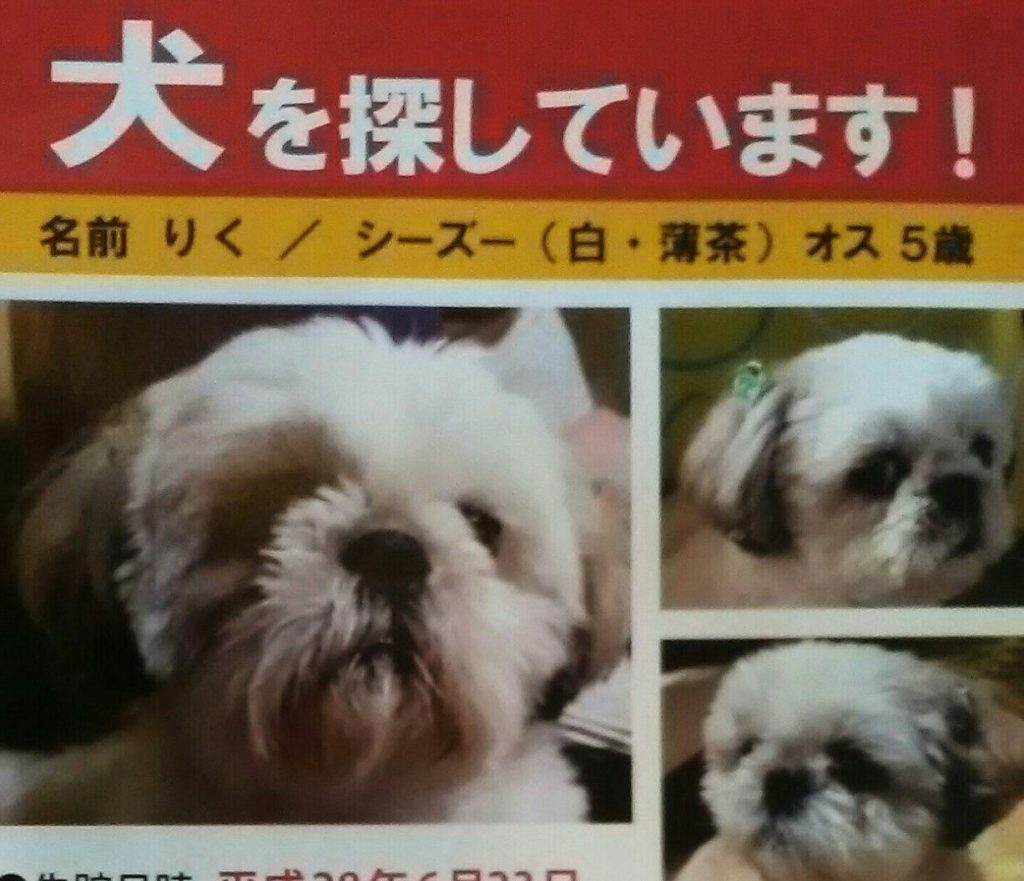 迷子犬ポスター