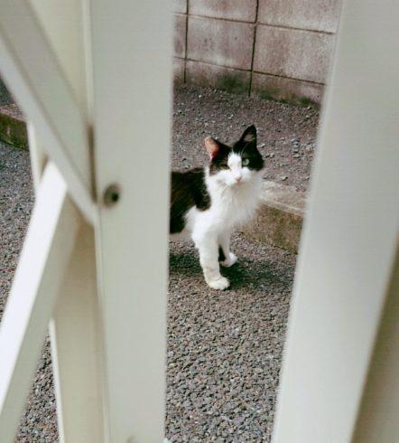 散歩中の猫