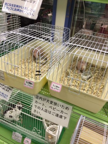 ロイヤルホームセンター宮前平店