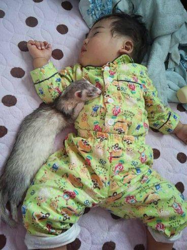 赤ちゃんとフェレット