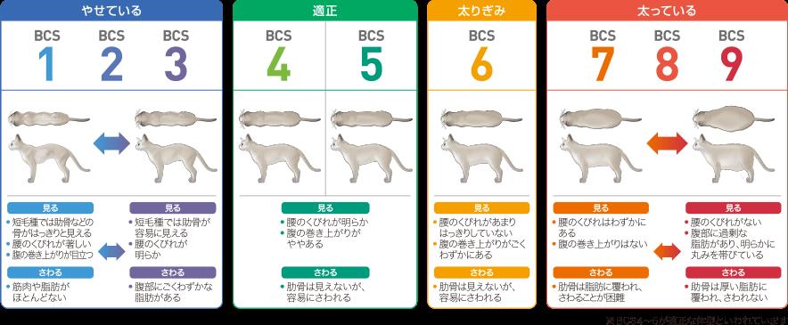 ロイヤルカナン 猫のBCS