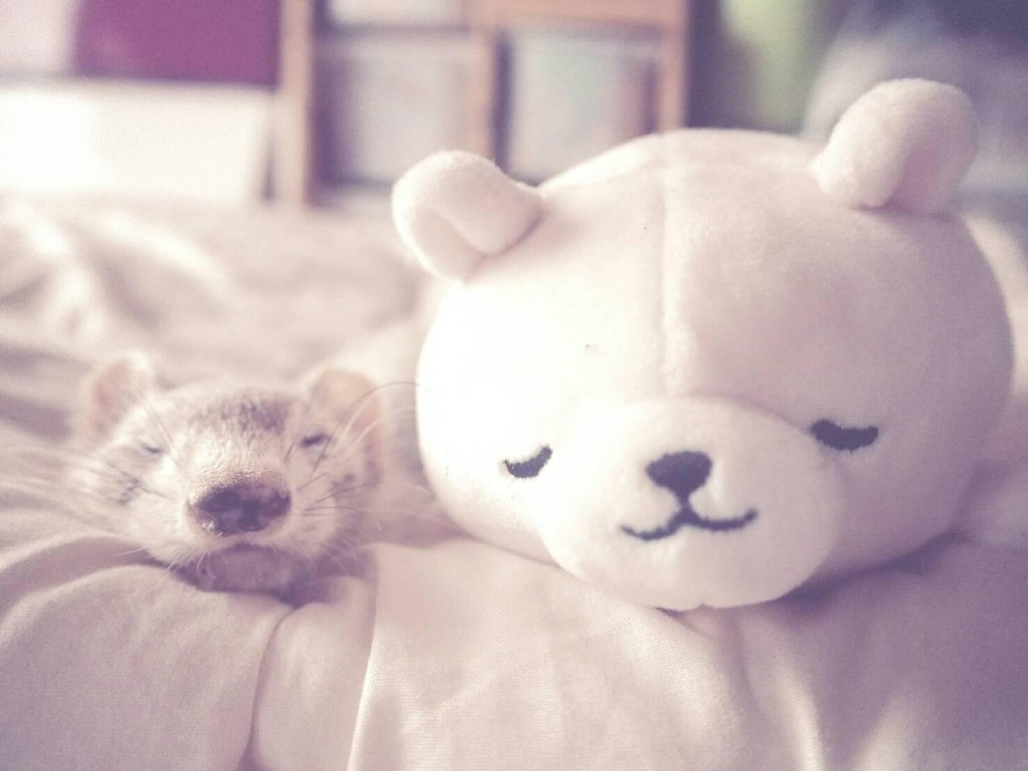クマとフェレット