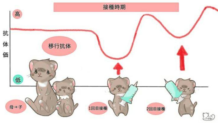 ワクチン(移行抗体)の仕組み