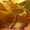 保護猫カフェの兄弟猫