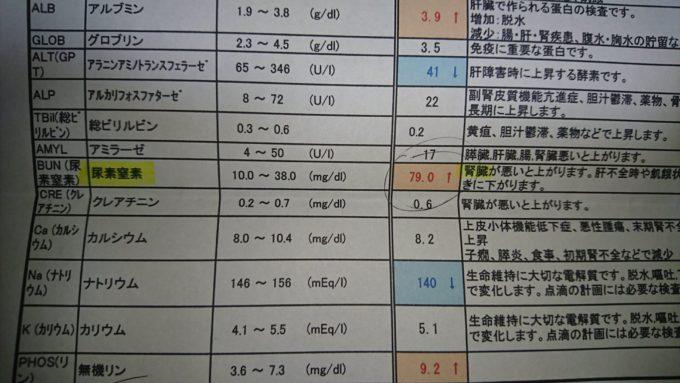 フェレット 血液検査の結果