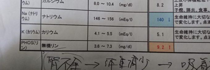 フェレット腎臓の数値