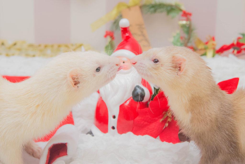 クリスマスのフェレット