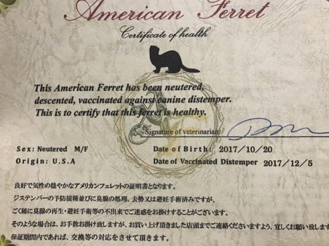 アメリカンフェレット証明書