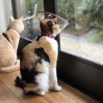 外を見ている猫