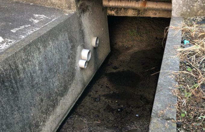 フェレット発見した排水管