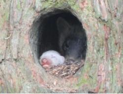 巣穴から見える野生動物