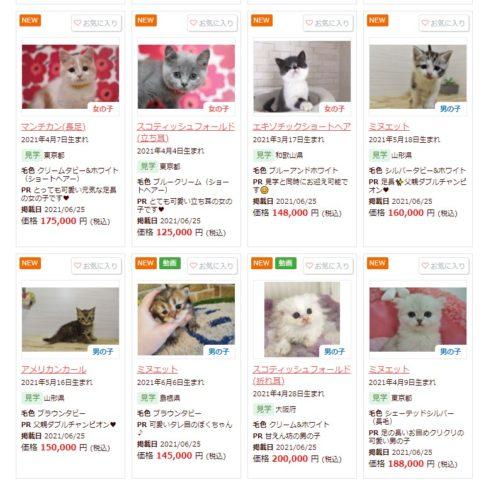 ブランド猫の値段