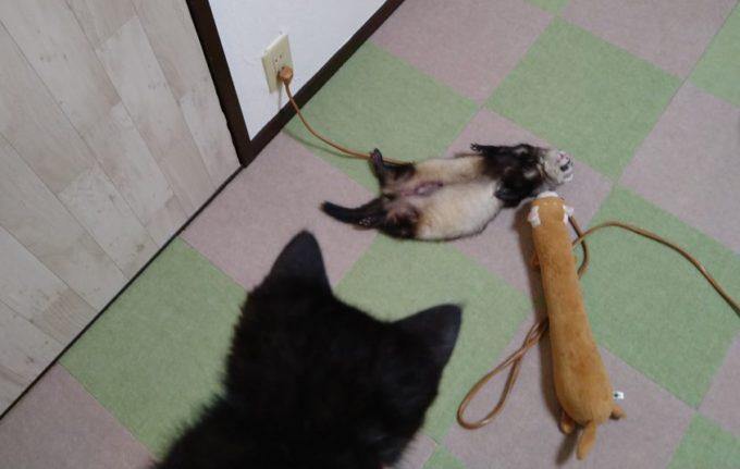 子猫とフェレット